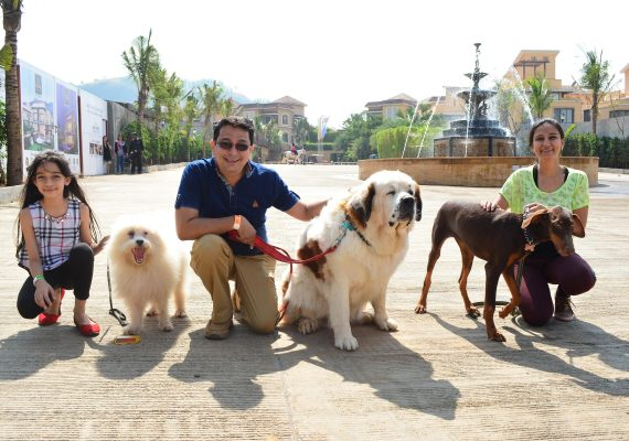 Tips to travel with your pets